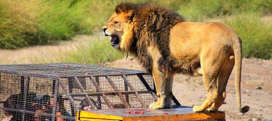 parque-safari